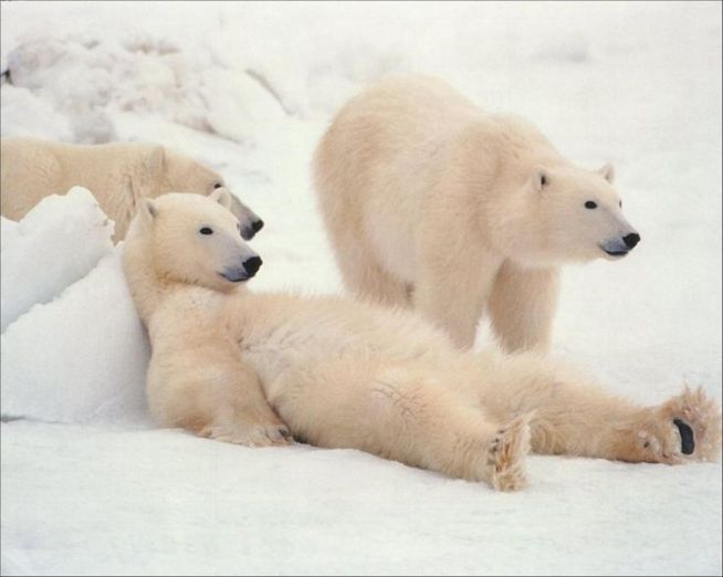 Cozy Bear and Fancy Bear aka APT 28 & APT 29